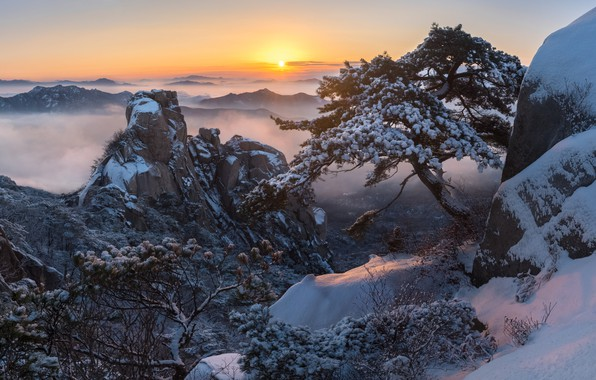 Picture winter, clouds, snow, trees, landscape, mountains, nature, fog, sunrise, rocks, dawn, morning, pine, Korea, reserve, …
