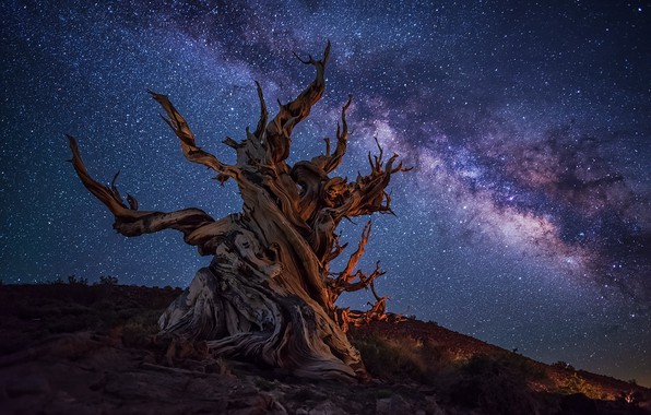 Picture night, snag, the milky way, © JAY HUANG
