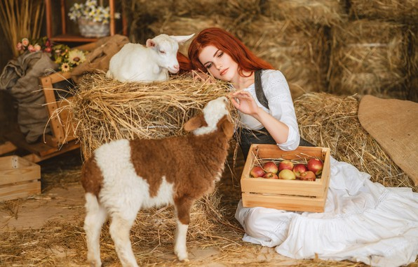 Picture girl, apples, hay, red, lamb, box, redhead, sheep, goat, goat, lamb, Диана Липкина