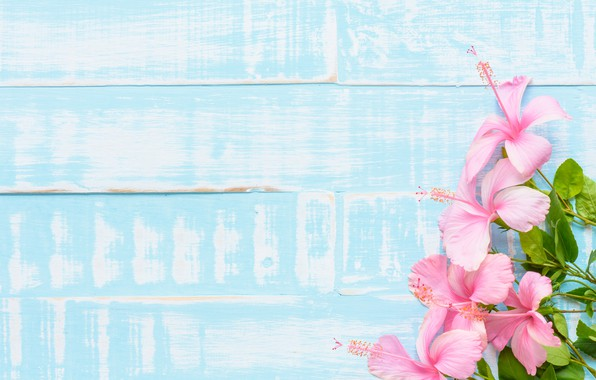 Picture flowers, background, wood, pink, flowers
