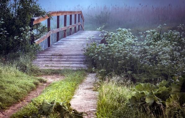 Picture summer, bridge, nature