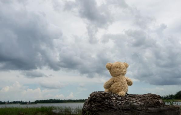 Picture sand, sea, beach, clouds, toy, bear, bear, Board, beach, bear, sea, teddy, lonely, cute, lonely