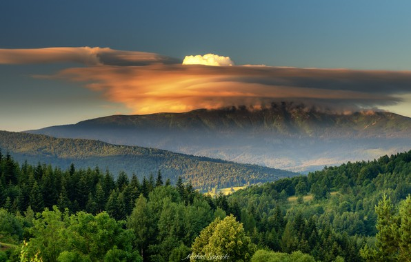 Picture forest, clouds, trees, mountains