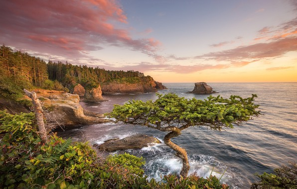 Picture sunset, tree, coast