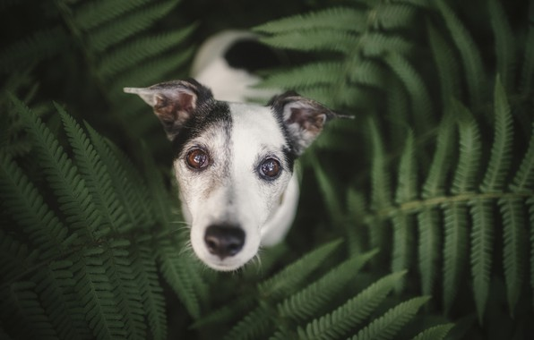 Picture eyes, each, dog, fern, eyes, dog, friend, fern, Heike Willers