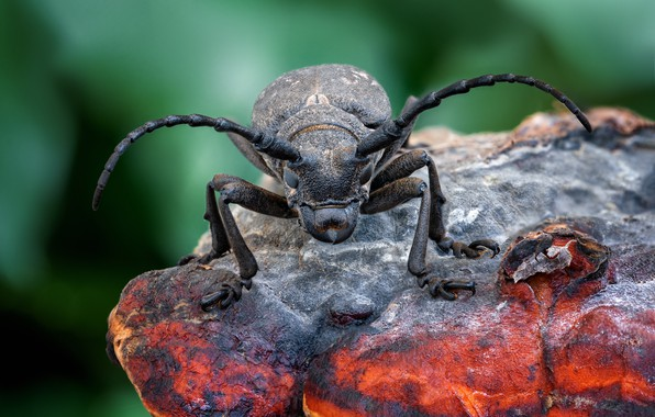 Picture mushroom, beetle, insect