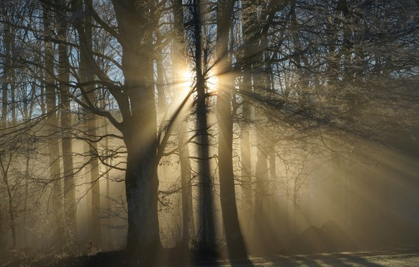 Picture forest, trees, haze, sunlight