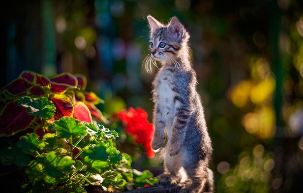 Picture flowers, kitty, stand, bokeh