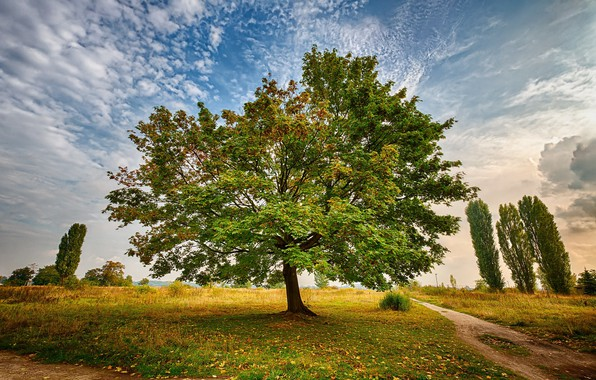 Picture road, the sky, clouds, photo, tree