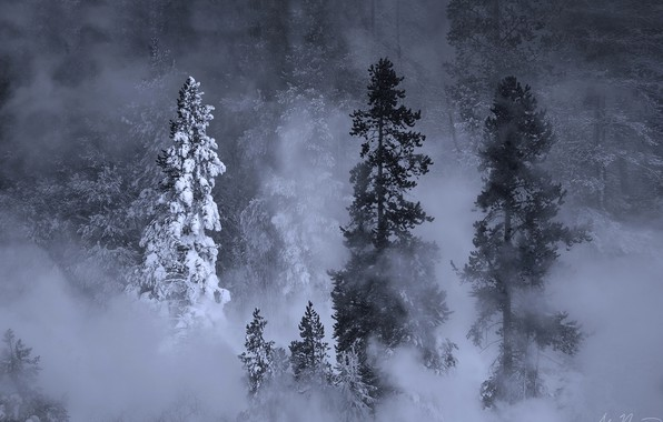 Picture winter, forest, snow, trees, nature, fog