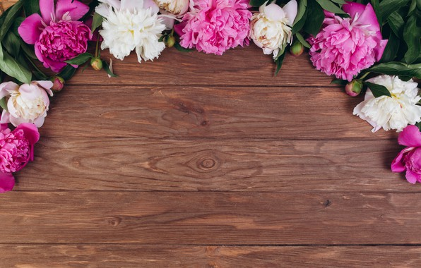 Picture flowers, background, petals, peonies
