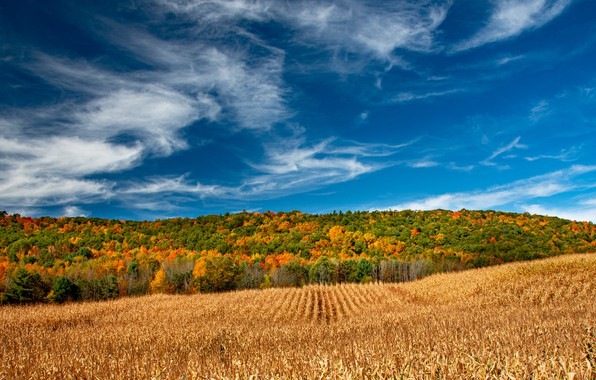 Picture field, autumn, forest, the sky, The State Of New York, New York State, The Region …