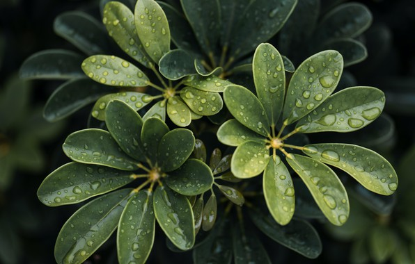Picture wet, close-up, water, leaves, macro, blur, drops, plant, 6k hd background