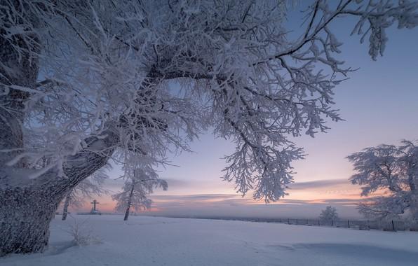 Picture winter, snow, trees, branches, dawn, cross, morning, Russia, Perm Krai, White mountain