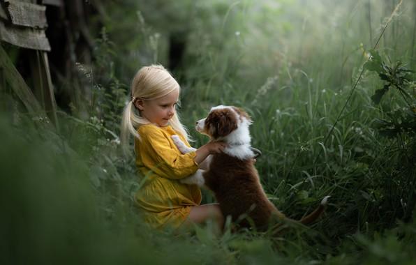 Picture grass, dog, girl, puppy, friends