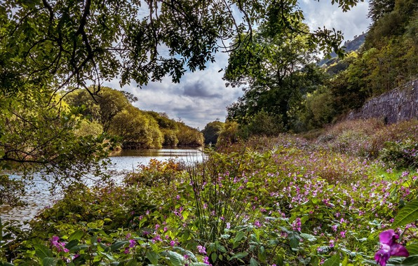 Picture flowers, river, meadow