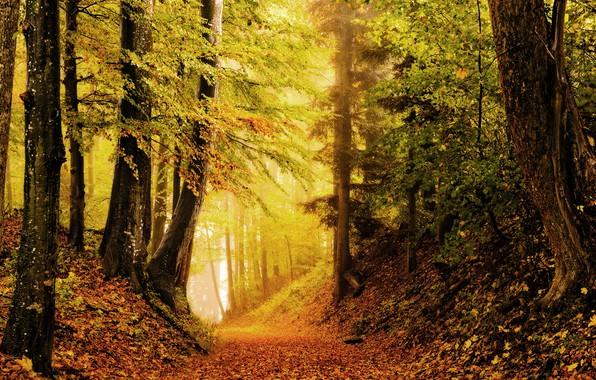 Picture autumn, forest, photo, foliage, the ravine