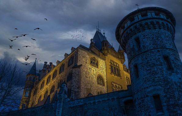 Picture birds, castle, tower, Germany, Germany, Saxony-Anhalt, Saxony-Anhalt, Wernigerode, Wernigerode, Wernigerode Castle, Замок Вернигероде