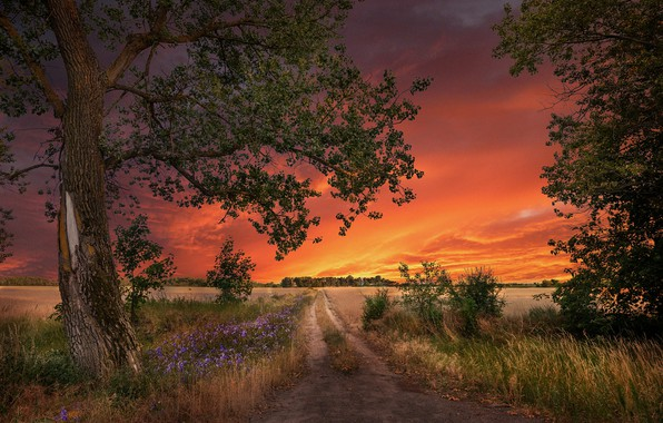 Picture road, field, trees, landscape, sunset, nature, grass