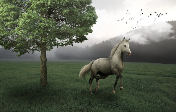 Picture field, forest, birds, nature, fog, rendering, tree, horse, horse, art, horse