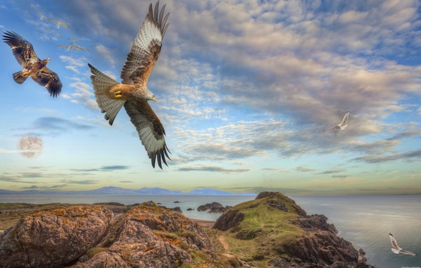 Picture sea, the sky, birds, photoshop