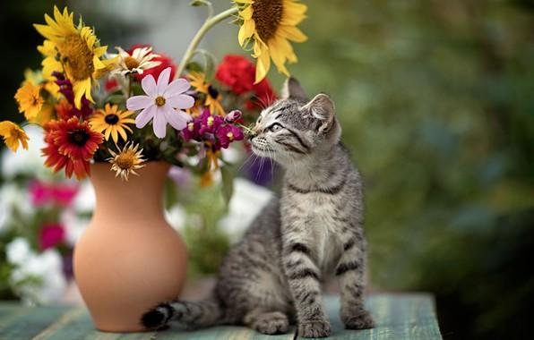Picture cat, flowers, pitcher, kitty, cat, Yuriy Korotun