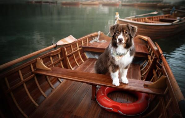 Picture lake, dog, boats, lifeline
