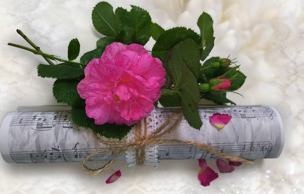 Picture flower, summer, nature, notes, music, mood, rose, beauty, rose, flower, beautiful, flowers, beautiful, beauty, harmony, ...