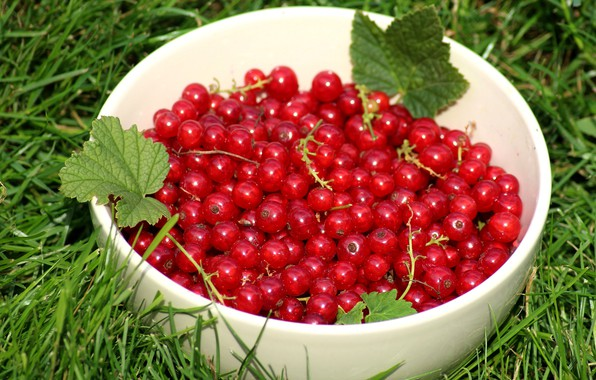 Picture greens, summer, grass, leaves, berries, glade, food, harvest, Cup, red, bowl, red, a lot, currants, …