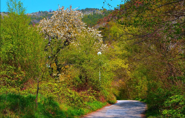 Picture Road, Spring, Trees, Spring, Flowering, Road, Trees, Flowering