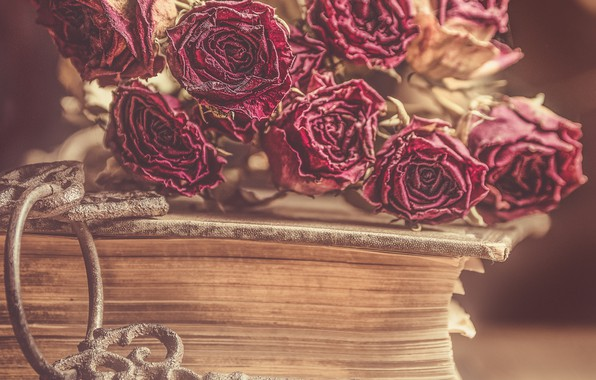 Picture flowers, style, roses, key, book, buds, dried