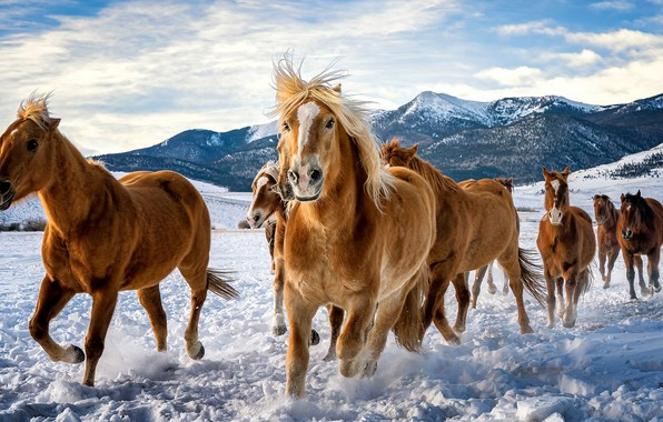 Picture winter, field, the sky, look, clouds, snow, mountains, horse, horse, tops, horses, horse, running, mane, …