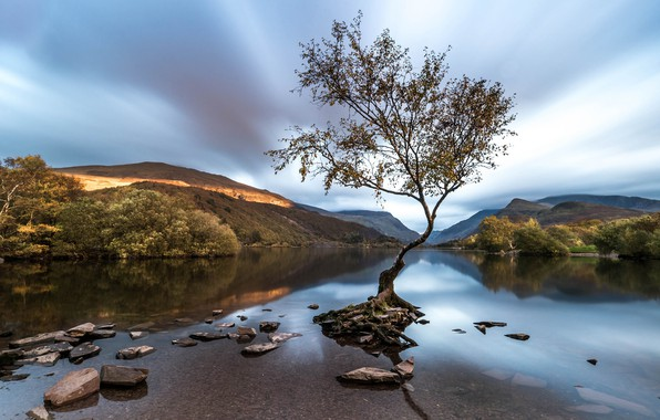 Picture tree, Wales, Snowdonia, Llanberis