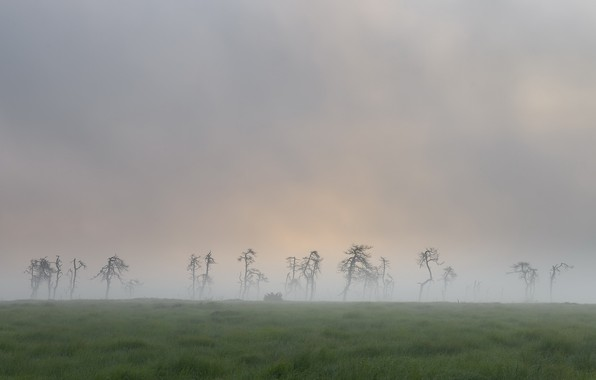 Picture field, nature, fog, dead trees