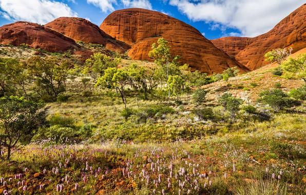 Picture rocks, spring, Australia, National Park Uluru Kata-Tjuta