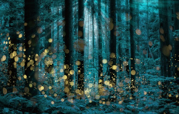 Picture trees, firefly, longexposure, Shining forest
