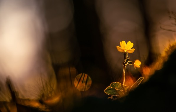 Picture light, flowers, nature, spring