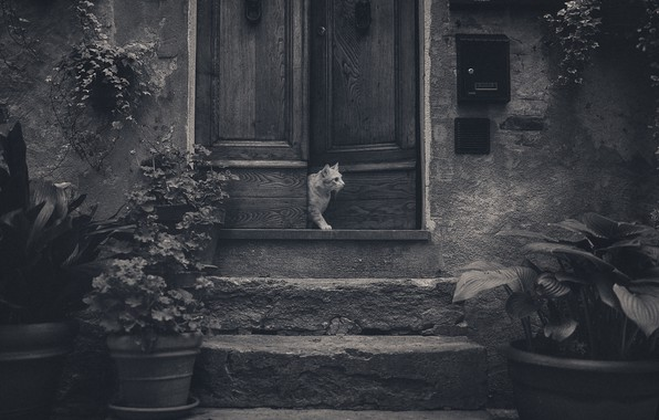 Picture cat, flowers, the door, stage, cat, flowers, door, steps, Anton Rostov