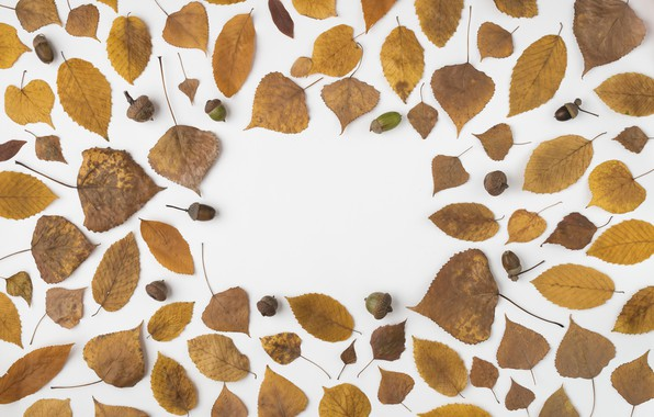 Picture autumn, leaves, background, colorful, background, autumn, leaves, autumn