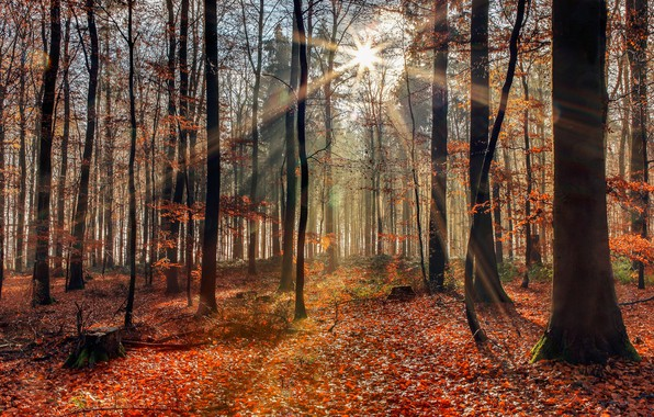 Picture autumn, forest, sunlight