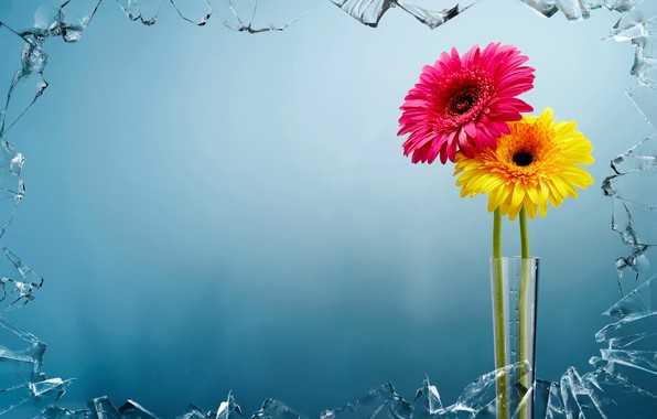 Picture glass, flowers, background, vase