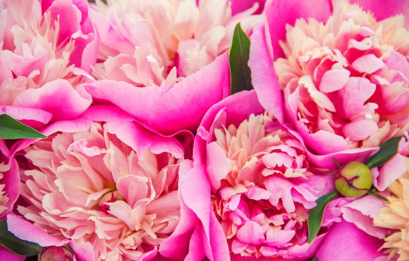 Picture flowers, bouquet, pink, pink, flowers, beautiful, peonies, peonies