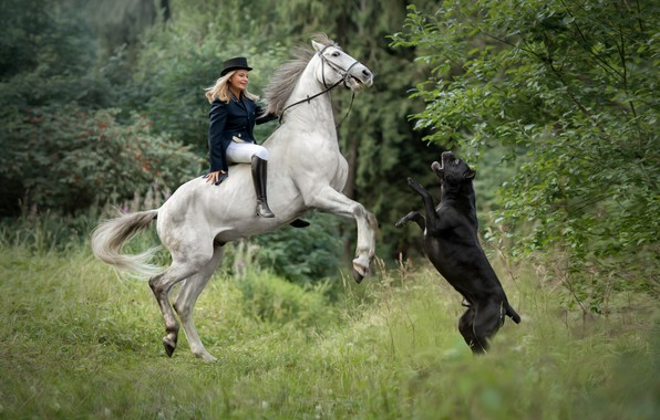 Picture horse, dog, girl, rider