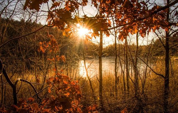 Picture autumn, sun light, autumn light