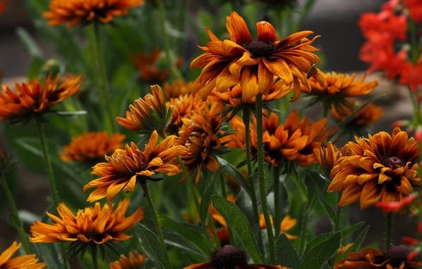 Picture macro, petals, Rudbeckia