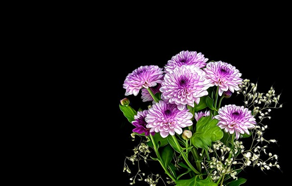 Picture rendering, Flowers, black background, bouquet of chrysanthemums
