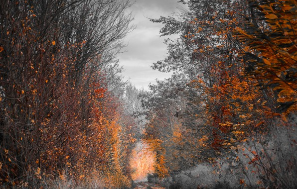 Picture FOREST, TRAIL, AUTUMN