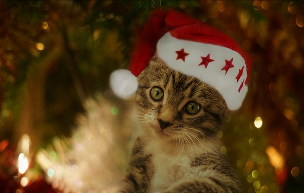 Picture cat, look, light, red, lights, pose, the dark background, kitty, grey, holiday, portrait, blur, Christmas, …