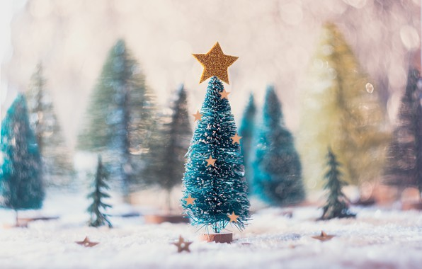 Picture holiday, star, tree