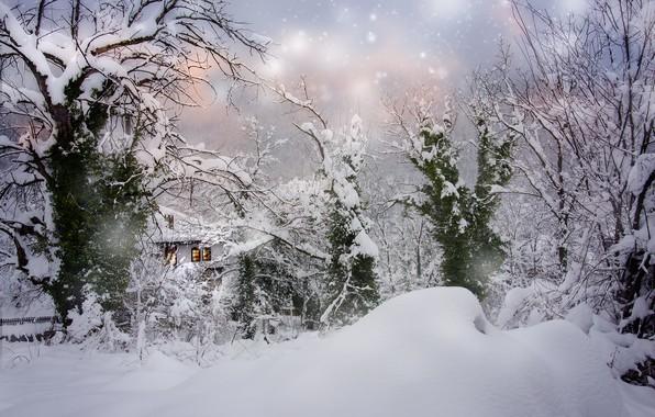 Picture winter, snow, trees, landscape, nature, house, the snow, snowfall, Bulgaria, Albena Markova